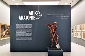 à voir en urgence, une edition de «De humani corporis fabrica» de Vesale!au musée Fabre à Montpellier